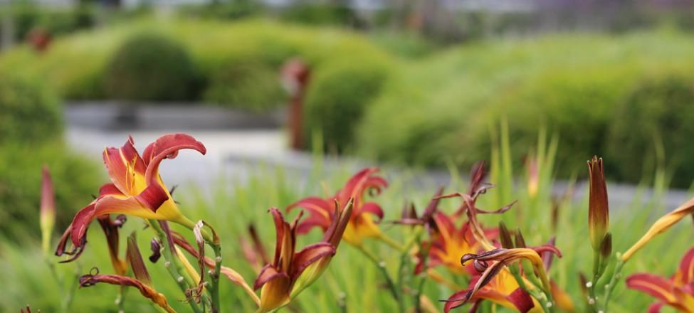 dart marina hotel garden, dartmouth